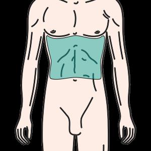 腹部(乳輪最下~へそ)