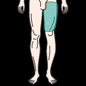 大腿(片方・前面)