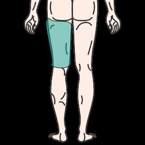 大腿(片方・背面)